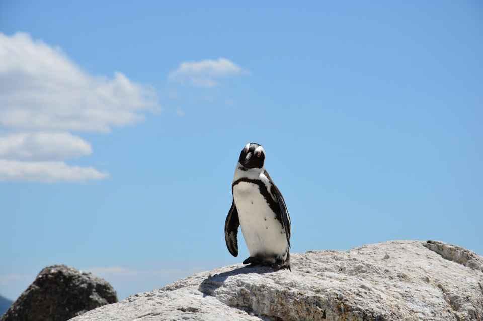 ペンギンアップデート3.0が年内導入か?担当者が取るべき対策3つ